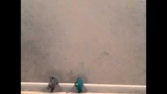 Babo meets a friend part 1 (Latest Video)