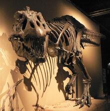 Trex-fossil