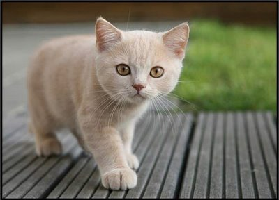 File:Cute-orange-cat.jpg