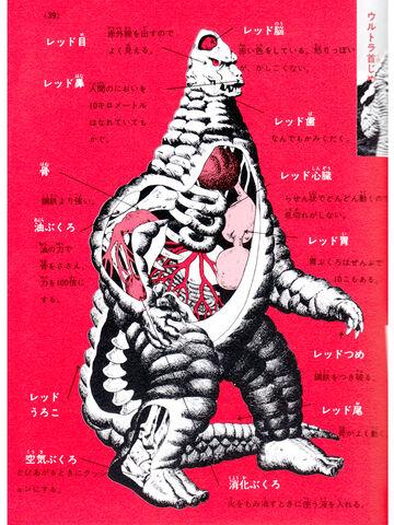 File:Red King Anatomy.jpeg