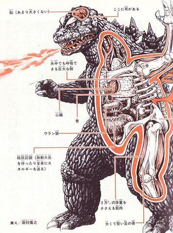 File:Godzilla anatomy.jpg