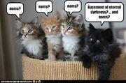 Basement Cat little