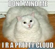 Cloud cat