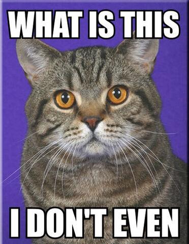 File:I dont even cat.jpg