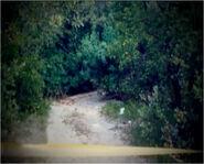 Valentine Doe crime scene