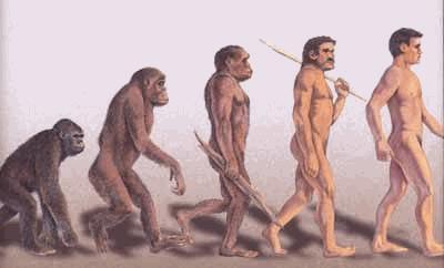 File:Evolution homme.jpg