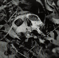 Scull of Kramer found in the canyon