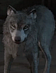 WolfieTemplate
