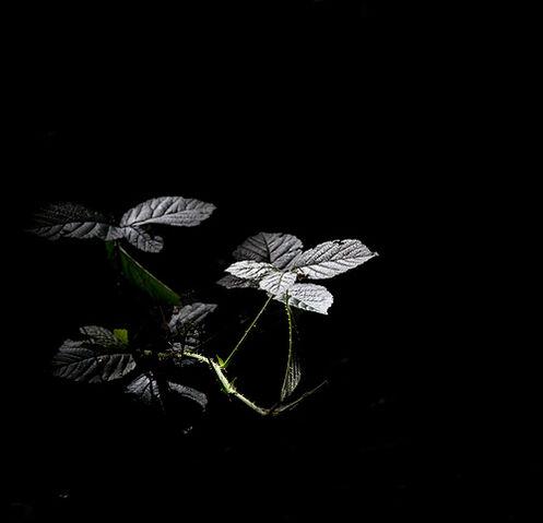 File:Woodland light.jpg