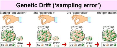 Genetic Drift-Artificial Selection-01