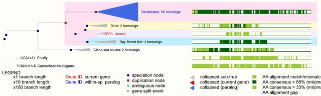 File:EnsEMBL Web Component Gene ComparaTree-Homo sapiens-Gene-Compara Tree-68-ENSG00000068078-10.jpg