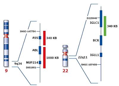 File:RTEmagicC dfb6c6b417.jpg.jpg