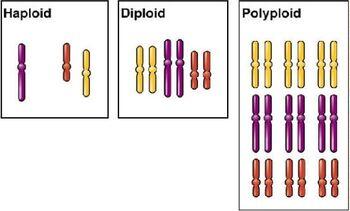Polyploidy gen
