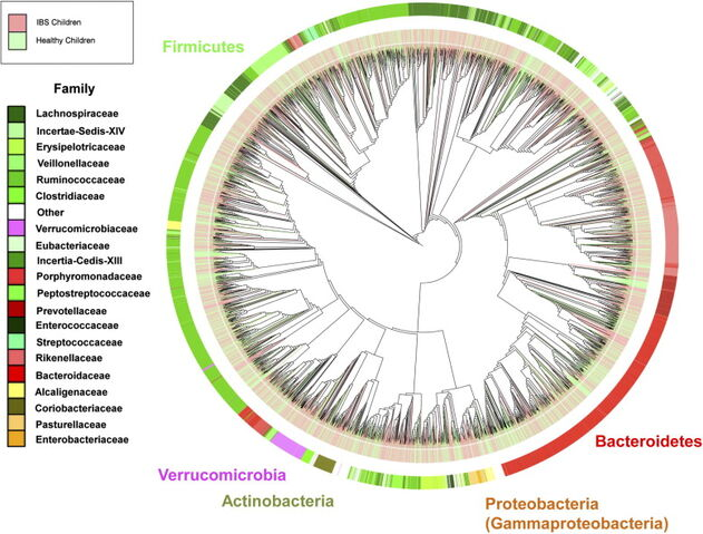 File:Microbiomibsnormal.jpg