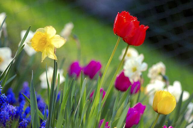 File:II - Colorful spring.jpg