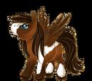 Rocky Mountain Pegasus