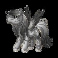 Confusion Pegasus Baby