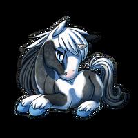 Blue Roan Tobiano Unicorn Baby