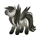 Dark Grey Pegasus