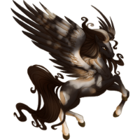 Black Pinto Pegasus