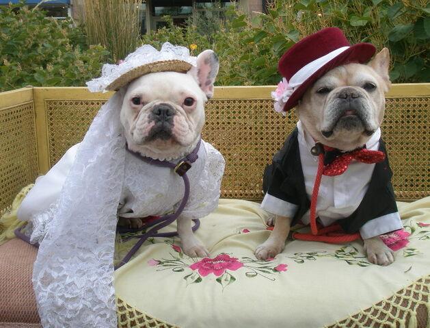 File:Wedding-day-new-0201.jpg