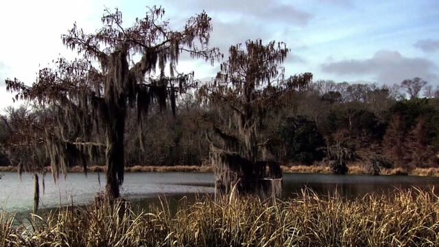 File:The Bayou.jpg