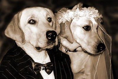 File:Dog-wedding-agency.jpg
