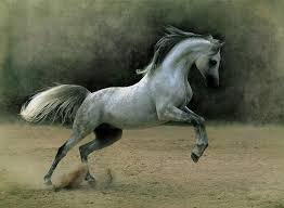 File:HorseMikael2.jpg