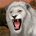 White Lion feed
