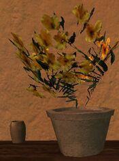 Short round flower pot