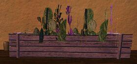 Medium green and purple flower box