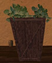 Small wooden planter with green plants