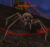 Bristlelash spider