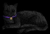 File:Black Cats.housecat.png