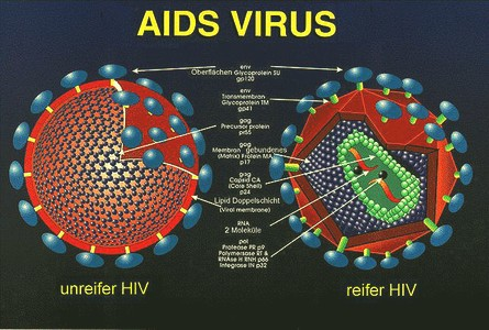 File:Aids virus.jpg