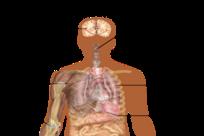 1200px-Symptoms of influenza svg