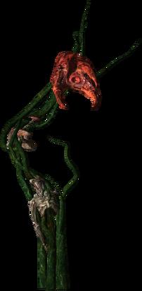 Echinops.Full.png