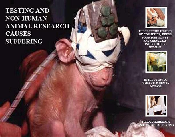 File:VeganTesting.jpg