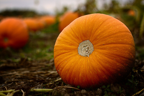File:Halloween is just around the corner.jpg