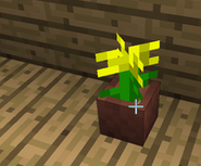 The holy yellow flower