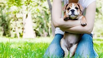 How to adopt a dog from a shelter (Myths debunked)