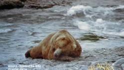Alaska Spirit of the Wild (1997) - Open-ended Trailer (e13722)