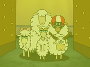 DCFDTL as the Sheeps