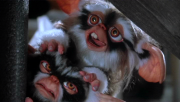 George and Lenny as a Mogwai