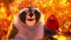 Raccoon with Cardinal