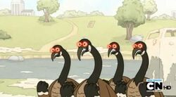 Regular show-a bunch of full grown geese 0007