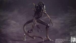 1314355460 aliens warrior nt fp 03