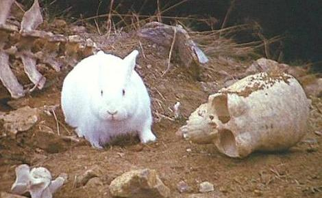 Image result for killer rabbit of caerbannog