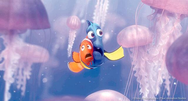 File:Jellyfish.jpg