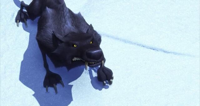 File:Black Wolf looking up.jpg